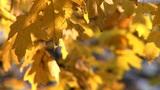 autumn 23 Footage