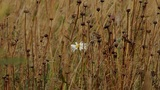 white flower on a yellow field Footage