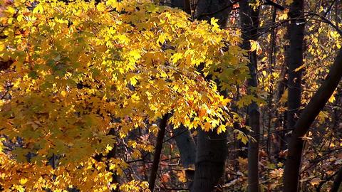 autumn 20 Stock Video Footage