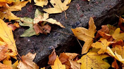 autumn 24 Stock Video Footage