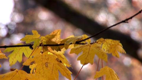 autumn 26 Stock Video Footage