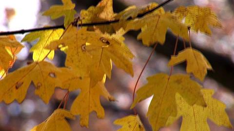 autumn 26 Footage