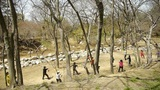 Gymnastics exercise in forest.leisure,oriental,sport,people Footage