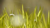 Beautiful wild flowers in grass,Cobwebs spiders Footage