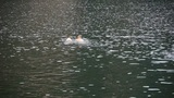 people and dog swimming in lake water Footage