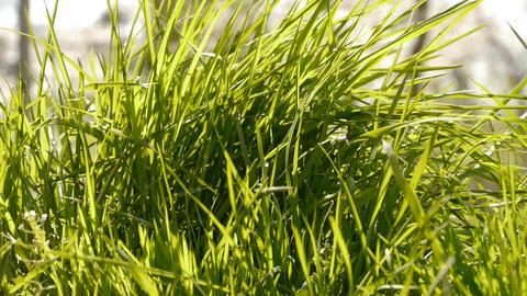 Lush weeds in wind,grassland Stock Video Footage