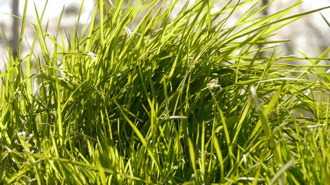 Lush weeds in wind,grassland Stock Video Footage