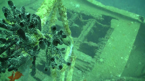 Shipwreck on the Seabed, Red Sea Stock Video Footage