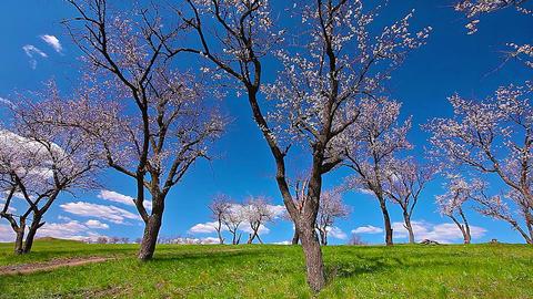 spring landscape. timelapse. 4K. FULL HD, 4096x2304 Footage