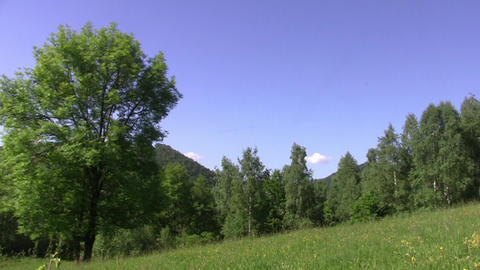 Panorama over the green forest and field with yellow flowers 58 Footage