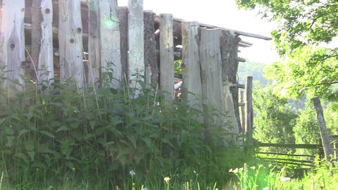 Wooden fence covered with nettles and green tree bordering the property 30 Footage