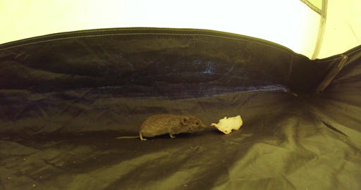 Adventures of a mouse in a tent Live Action