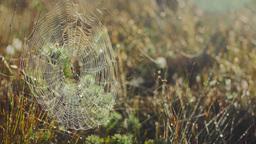 Spider in a web in grasslands Footage