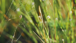 Spider in a web on green grass Footage