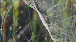Close-up of a spider in a web Footage