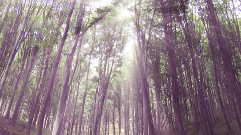 4 K Sun Shines through Leaves in Mysterious Deep Forest 1 Footage