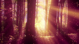 4 K Sun Shines Through Leaves In Mysterious Deep Forest 2 Magic Fireflies stock footage
