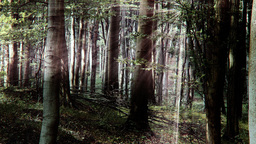4 K Sun Shines through Leaves in Mysterious Deep Forest 4 stylized Footage