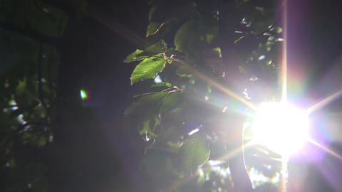 Moving away from the sun shining through the foliage of the forest 50 Footage