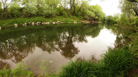 river Uzh, Transcarpathia, fry freshwater fish in the rapid mountain river Footage