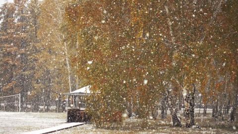 First Autumn Snowfall Footage