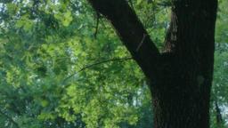 Inspiring Green Summer Moment 1