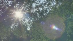 Inspiring Green Summer Moment 2