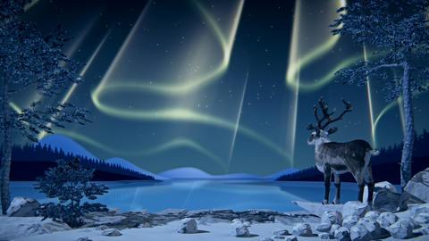 Reindeer looks at Northern Lights (Aurora borealis)... Stock Video Footage