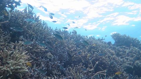 珊瑚と水面04 Footage