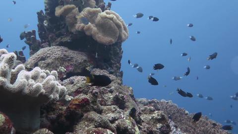 珊瑚と青03 Footage