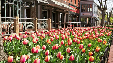 Pearl Street Mall Footage