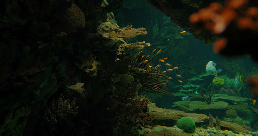 Aquarium Background With Several Fishes And Sharks Footage