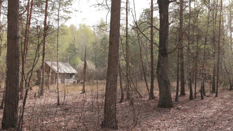 Wooden House in the Forest 01 Footage