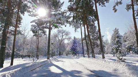 Sun Rays Winter Park Snow Trees Footage