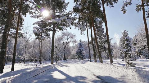 Sun Rays Winter Park Snow Footage