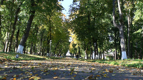 beautiful park with nice promenade path and big green trees Footage
