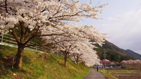 長野県塩尻市 桜の丘公園 ビデオ