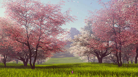 Mount Fuji and flowering cherry trees slow motion Animation