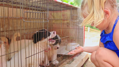 Little Blond Girl with Pigtail Watches Puppies in Cage Footage