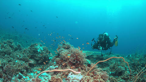Diver on a coral reef with plenty fish 4k Live Action