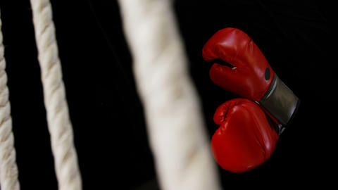 Boxing gloves on the boxing ring Live Action
