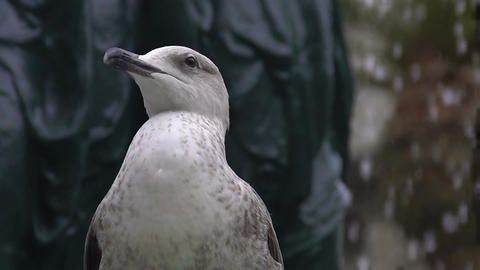 Seagull looking around, urban bird sitting on street fountain and relaxing Footage