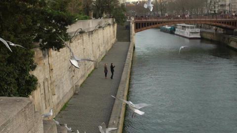 Sweet romantic couple walking on river embankment, seagulls flying near water Footage