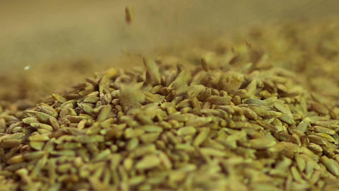 Close-up of rye seeds dropping in pile of processed organic grain, agriculture Footage