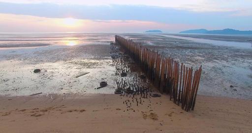 Birds on the bamboo dam Footage