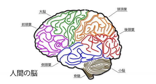 4K Human Brain 01 Japanese Animation