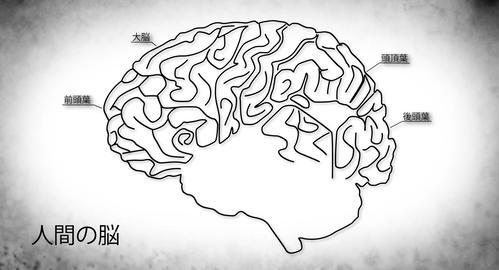 4K Human Brain 01 Japanese Stock Video Footage