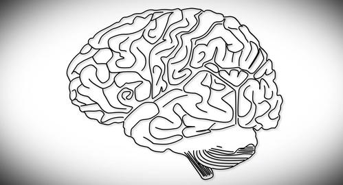 4K Human Brain 03 Animation