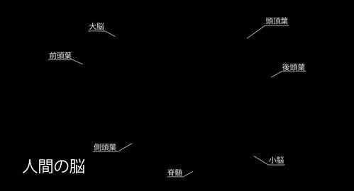 4K Human Brain 05 Japanese Stock Video Footage