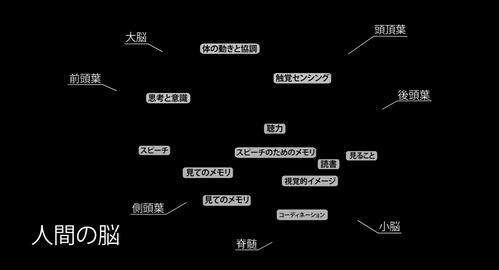 4K Human Brain 06 Japanese Stock Video Footage